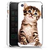 DeinDesign Coque Compatible avec Apple iPhone 3Gs Étui Housse Chat Kitten Bébé Chat