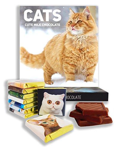 regalo-del-chocolate-gatos-regalos-de-la-comida-ideas-actuales-regalo-divertido-para-todos-los-amant