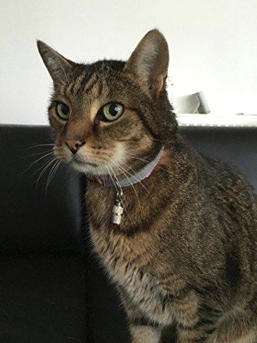 2 geriffelte Adressanhänger für Katzen und Hunde geeignet / Hübscher Halsbandanhänger aus Metall (2 Stück Packung) - 3