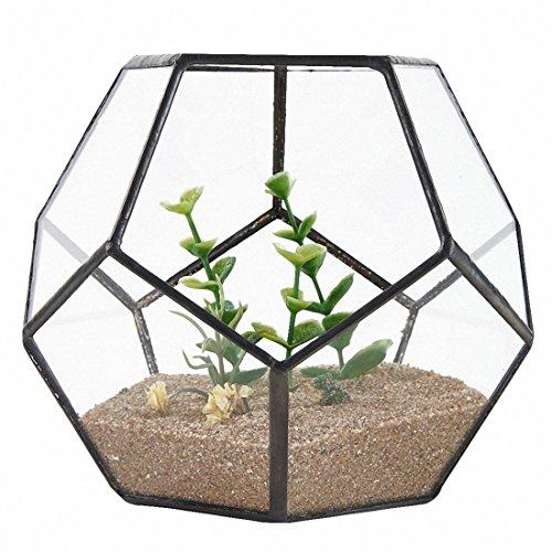 TOOGOO Schwarz Glas Pentagon Geometrische Terrarium Container Fensterbank Decor Blumentopf Balkon Pflanzer Diy Display Box (keine Pflanze)