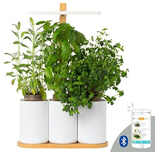 LILO, le potager d'intérieur autonome de Prêt à Pousser - Les 3 premiers aromates sont inclus
