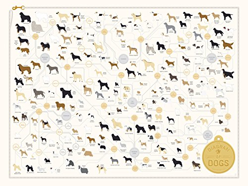 dog-breed-poster-the-diagram-of-dogs-24-x-18-by-pop-chart-lab