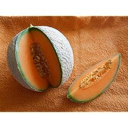 Melone Charentais 5 Samen -Neue Züchtung aus Cantaloupe/Zuckermelone Sehr sehr Süß