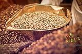 Haraaz Green Coffee AA   Premium-Rohkaffee 100% Arabica   Speciality Coffee   Ganze Bohnen   Grüner Kaffee aus dem Jemen   Rohkaffeebohnen zum rösten (350)