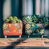 Sungmor Set of 4 - Jardinière en céramique de Style Artisanal - 14CM Plante de Cactus succulente -...