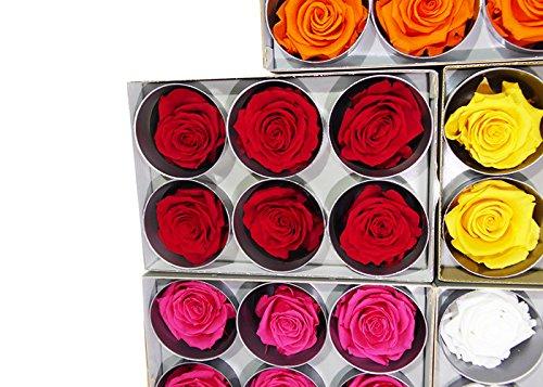 6 Rose Stabilizzate (ROSSO)