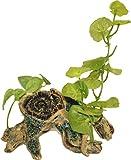 WAVE Beauty Plante sur Branche 1 Objet d'Ornement pour Aquariophilie Taille S