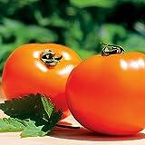 PLAT FIRM KEIM SEEDS: 25 - Samen: Chef Choice orange F1 Tomate sät - fast Neon, Innenfarbe !! Geben Sie Schiff !!