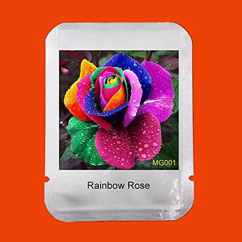 100 pcs Graines Rare Hollande Rainbow Rose Fleur jardin Fleur Rare Graines Colorful Graines Rose * Emballage professionnel, # MG001