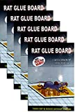#9: Tiger Rat Glue Trap Set Of 5 - Mouse Insect Rodent Lizard Trap Rat Catcher Adhesive Sticky Glue Pad