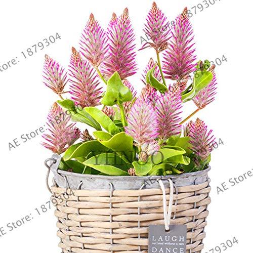 pinkdose importati giardino ornamentale erba, erba coda di volpe australiano, facile da coltivare, bonsai pianta da vaso per 200pcs domestiche del cortile: mix