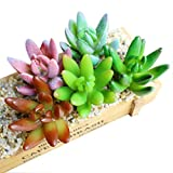 Calcifer® 5x Künstlicher Kaktus Pflanzen Succulents Schlumbergera klaffmuschel für Home Office Garten Hochzeit Party Decor