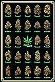 Cannabis Poster Best Buds Marihuana-Sorten (61cm x 91,5cm) + Ü-Poster