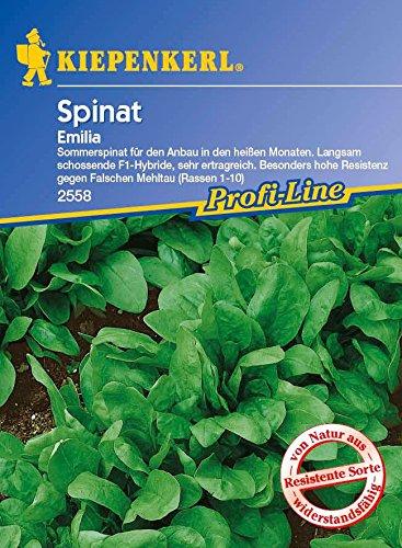 Spinatsamen - Spinat Emilia F1 von Kiepenkerl