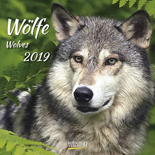 Wölfe (BK) 228519 2019: Broschürenkalender mit Ferienterminen. Fasziniernde Bilder von Wölfen. 30 x 30 cm
