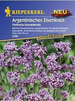 Verbena bonariensis Argentinisches Eisenkraut von Kiepenkerl - Blumen-Saatgut - Du und dein Garten