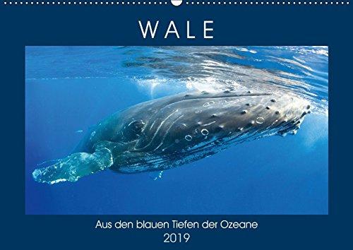 Wale: Aus den blauen Tiefen der Ozeane (Wandkalender 2019 DIN A2 quer): Wale: Freiheit in den Tiefen der Meere (Monatskalender, 14 Seiten ) (CALVENDO Tiere)