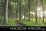 Magische Wälder 2018: Großer Foto-Wandkalender mit Bildern aus bunten Wäldern. Edler schwarzer Hintergrund und Foliendeckblatt. PhotoArt Panorama Querformat: 58x39 cm.