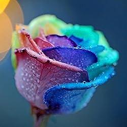 BESTIM INCUK - 200Pcs multicolor arco iris rosa flor semillas jardín plantas semillas semillas de flores