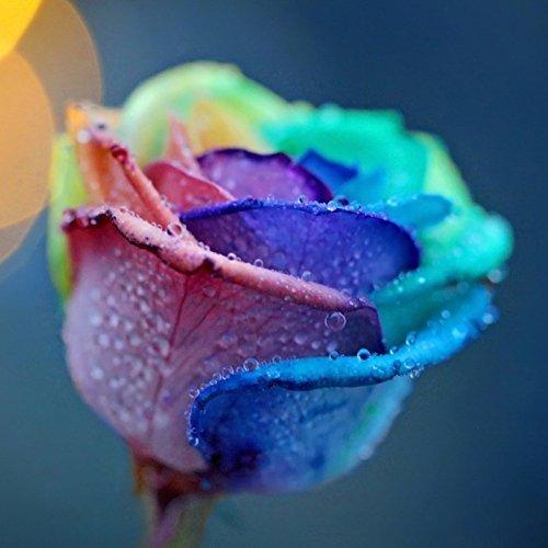 bestim-incuk-200pcs-multicolor-arco-iris-rosa-flor-semillas-jardn-plantas-semillas-semillas-de-flore