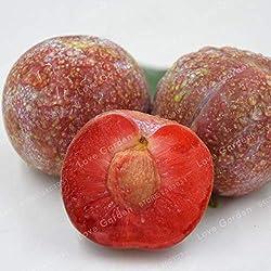 Pinkdose 10pcs Familie Rosaceae Prunus Cerasifera Pflanze Zierpflanze Kirschpflaume Strauch Pflanze weit verbreitet Myrobalan Pflaume Pflanze: 1