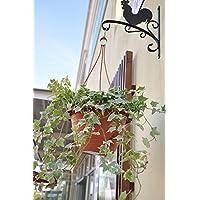 WORTH Ganci a parete appendiabiti ferro nero Piante Vaso da fiori Staffa w/anticorrosivo Verniciatura a polvere Gallo e Lovely forma