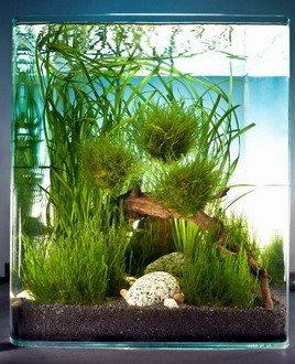 Dennerle 15 Schwimmpflanzen