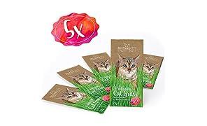 PRETTY KITTY 5 sachets de graines d'herbe à chat PrettyKitty ; Paquet de 5 sachets de semence de menthe aux chats pour environ 50 pots