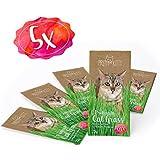 5 sachets de graines d'herbe à chat PrettyKitty ; Paquet de 5 sachets de semence de menthe aux chats pour environ 50 pots