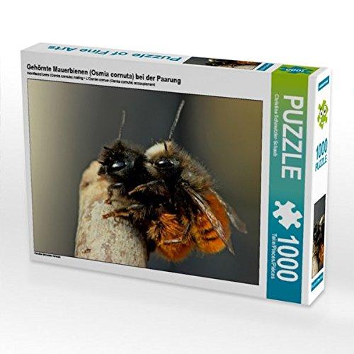Preisvergleich Produktbild Gehörnte Mauerbienen (Osmia cornuta) bei der Paarung 1000 Teile Puzzle quer