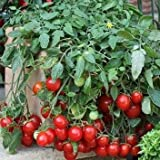 GEOPONICS 10 semilla de 3,651 cereza Fall