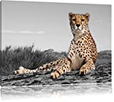 prächtiger Gepard in Savanne schwarz/weiß Format: 100x70 auf Leinwand, XXL riesige Bilder fertig gerahmt mit Keilrahmen, Kunstdruck auf Wandbild mit Rahmen, günstiger als Gemälde oder Ölbild, kein Poster oder Plakat