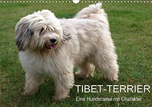 Tibet-Terrier - Eine Hunderasse mit Charakter (Wandkalender 2020 DIN A3 quer): Der Tibet-Terrier ist eine liebenswerte, lebhafte, freundliche und ... (Monatskalender, 14 Seiten ) (CALVENDO Tiere) -
