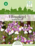 Elfenspiegel Nemesia Seventh Heaven