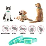 best tick collar for small, medium and large dogs, waterproof, natural flea and tick protection last for 3 months Best Tick Collar for Small, Medium and Large Dogs, Waterproof, Natural Flea And Tick Protection Last for 3 Months 51ih714YBIL