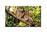 BOAOMAN Modern Canvas Prints Poster Wall Art Modular Pictures Animal A Pair of Owls in Woods Paintings Home Decor Framework 3 panel 20x40inchx3