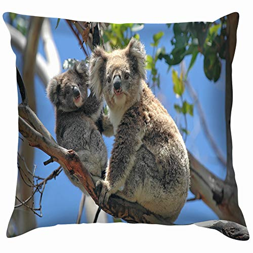 beautiful& Wild Koalas Along Great Ocean Road Animals Wildlife Australia Nature Funny Square Throw Pillow Cases Cushion Cover for Bedroom Living Room Decorative 18X18 Inch (Shop Halloween Melbourne)