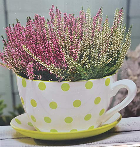 VENEXA-TRADER New Beautiful Gaint Teacup & Saucer Planter in Green & White