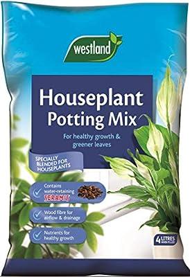 Westland Houseplant Potting Compost : everything £5 (or less!)