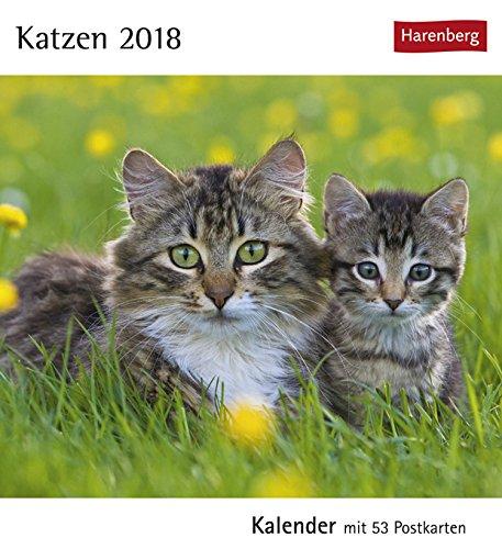 Postkartenkalender Katzen - Kalender 2018 - Harenberg-Verlag - mit 53 heraustrennbaren Postkarten - 16 cm x 17,5 cm (Schreibtisch Katze-kalender)