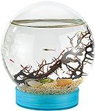 Unbekannt evivo Autarkes Ökosystem: Geschlossene Biosphäre mit Garnelen