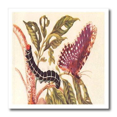 3drose HT _ 163074_ 1Bild von Vintage Schmetterling und Raupe auf plant-iron auf Heat Transfer Papier Für weiß Material, 820,3cm