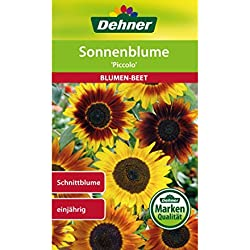"Dehner Blumen-Saatgut, Sonnenblume ""Piccolo"", 5er Pack (5 x 3 g)"