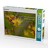 Johanniskraut 1000 Teile Puzzle quer (CALVENDO Hobbys)