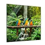 Glasbild - Blau-Gelber Macaw Papagei - 30x30 - Deko Glas - Wandbild aus Glas - Bild auf Glas - Moderne Glasbilder - Glasfoto - Echtglas - kein Acryl - Handmade