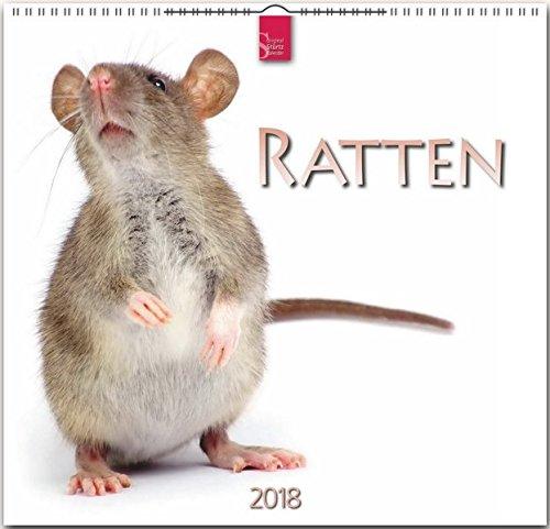 RATTEN: Original Stürtz-Kalender 2018 - Mittelformat-Kalender 33 x 31 cm