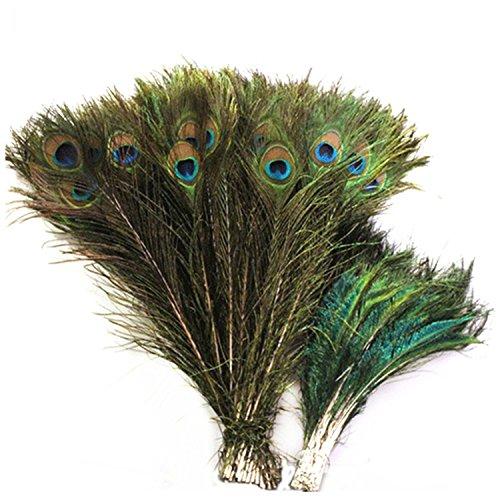 Celine Lin Echte, natürliche Pfau Schwanz Federn (25,4cm–12