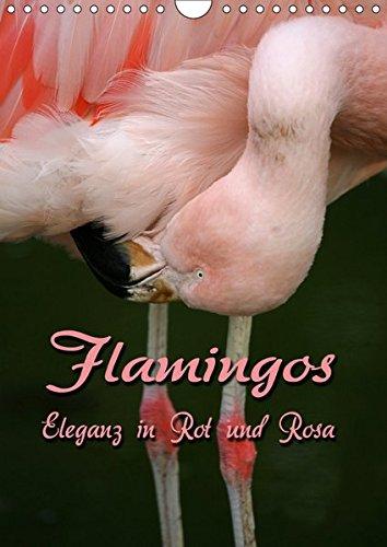 Flamingos – Eleganz in Rot und Rosa (Wandkalender 2019 DIN A4 hoch): Auf Augenhöhe mit Flamingos (Monatskalender, 14 Seiten ) (CALVENDO Tiere)