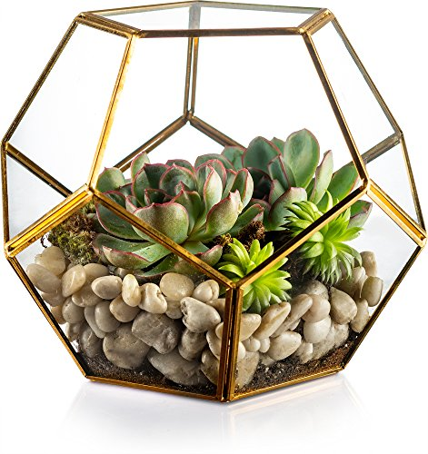 KooK Gold Moderner Geometrische Terrarium, saftige,