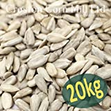 20kg SACK OF SUNFLOWER HEARTS - BIRD FOOD Bild